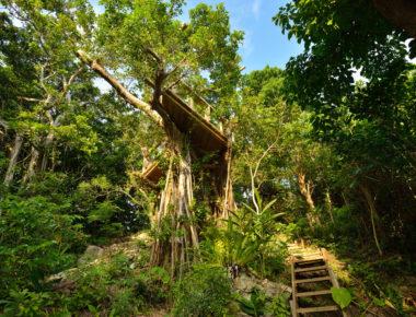 海坐の森のツリーテラス